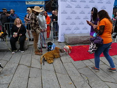 Halloween Pet Parade & Costume Contest (Teixeira, Paulo) Tags: dog dogs pet pets parade boston panasonic gh5 leica 1260mm lens camera costume contest city people show