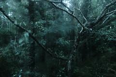 降り籠められる (atacamaki) Tags: xt2 xf 1855mm f284 fujifilm jpeg撮って出し atacamaki japan ibaraki kasumigaura nature rain tree 庭 day life green color weather 雨 森