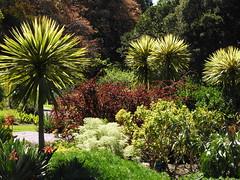Royal Botanic Gardens (Lesley A Butler) Tags: victoria royalbotanicgardens melbourne landscape garden australia