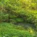 Hall of Mosses Creek