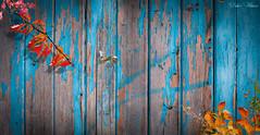 Cabanon d'automne (Didier HEROUX) Tags: cabanon automne autumn alpes alps alpi alpen hautesavoie bleu blue couleurs colors bois annecy france french didierheroux herouxdidier balade rando rouge red jaune yellow feuillage feuille saison francophile octobre 2019 flickr évasion alpesdunord magazine favorite artistic