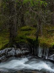 Before the snow (Fjällkantsbon) Tags: doroteakommun höst sverige klöverdalenmedomgivningar lappland borgafjäll evamårtensson västerbottenslän ice stream lapland