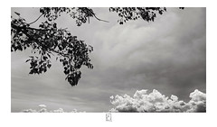 Branches and clouds (krishartsphotography) Tags: krishnansrinivasan krishnan srinivasan krish arts photography fineart fine art branches clouds sky monochrome blackandwhite leaf leaves nature canon affinity photo silver efex pro dxo fort dindigul tamilnadu india