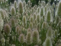 - (olivier.lours) Tags: macro plante