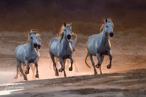 """Equus Emerging • <a style=""""font-size:0.8em;"""" href=""""http://www.flickr.com/photos/106269596@N05/48965925701/"""" target=""""_blank"""">View on Flickr</a>"""