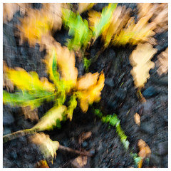 ICM fallen oak , Findatie (wwshack) Tags: icm intentionalcameramovement kinross lochleven lochlevenheritagetrail scotland treeabstracts trees
