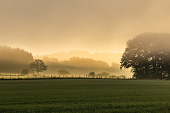 these moments... (Woewwesch) Tags: mist ladscape sunris golden trees outside autumn eifel woods forest meadow walk morning foggy pasture