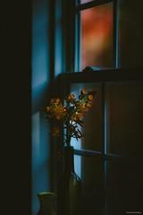 Last rays of light (josephzmuda2) Tags: flowers stilllife window bottle fineart naturallight plants color floral pittsburgh pennsylvania