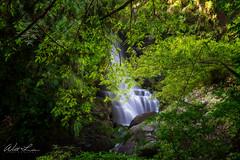 滿月圓瀑布下游 (威爾 劉) Tags: 滿月圓瀑布 瀑布 滿月圓森林遊樂區 三峽 台灣 waterfall taiwan sony a99m2 2470mm