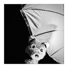 ICH gah' jetzt in'n Urlaub! (WolfiWolf-presents-WolfiWolf) Tags: umbrella square wolf herbst quadrat sauer schirm wolfi herbstlichkeit wolfismus eneamaemü wolfiwolf ihupfimviereck leggtsmialleamarsch diagonal torpedo unsinn verletzt wütend absicht unverständnis verschandelung diesmalkeinschweinebauch nichtexbloriert derexplodierendste wütendesuniversum keinwolfsmond dasuniversumistheutegeschlossen master majestic butlers verlassen grube marieschen butlerswoseizihr meinemajestät ichwillgetröstetwerden dummhääät dergrüblerischste 24mm warsebbaneeetrecht traurigerwolf wenigstenshawimääänebutlers regen esreeengtinmääämherzerl wolfkönntegrunzen mondfleck grenzerfahrung sideeffects wannistvollmond explore