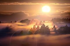 Foggy Sunrise in Whatawhata (Jos Buurmans) Tags: fog landscape lensflare mist morning nature newzealand northisland sun suninframe sunrise trees waikato waikatodistrict whatawhata nz hamilton