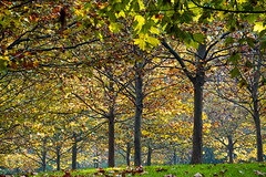 Autumn trees (Dumby) Tags: landscape bucurești românia autumn fall colors park nature outdoor trees