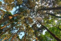 滿月圓森林遊樂區 (威爾 劉) Tags: 滿月圓森林遊樂區 森林 三峽 新北 台灣 manyueyuan taiwan forest sony a99m2 2470mm