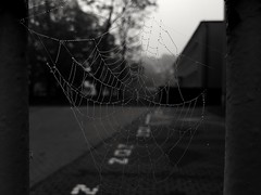 In the morning (wojciechpolewski) Tags: spiderweb cobweb morning blackandwhite schwarzweis street blanconegro blackwhite blancoenegro poland wpolewski photos photo