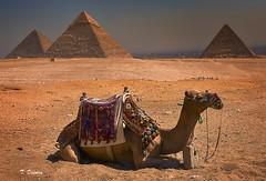 Descanso merecido!! (T. Dosuna) Tags: pirámides elcairoegipto desiertopirámides tdosuna nikon d7100 fotografíadepaisaje parquesnaturales landscape laspirámidesegipto