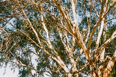 Leica, R8, Vario, Elmar, 35-70, C41, Fuji, 400, Bullcreek, Rossmoyne, Shelley, Tribute, Cafe, People, Caleb, Coffee, September, 2019, Perth, Western Australia (brett.m.johnson) Tags: westernaustralia vario tribute shelley september rossmoyne r8 perth people leica fuji elmar coffee caleb cafe c41 bullcreek 400 3570 2019