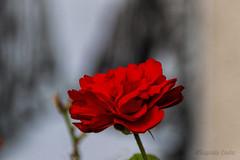 Fiori ovunque - Flowers everywhere (Eugenio GV Costa) Tags: approvato macro piccoli fiori nascosti small hidden flowers flower fiore