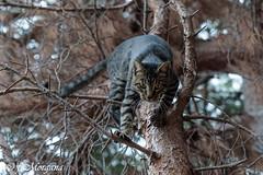 (fatamorgana.cb) Tags: gatto micio cat wildcat