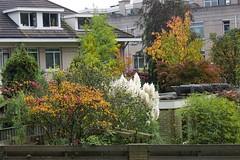 Herfst in Den Haag (Roel Wijnants) Tags: woningen tuinen bomen heesters kleuren herfst jaargetijden roelwijnants wandelen roelwijnantsfotografie somerightsreserved ccbync hofstijl haagspraak denhaag thehague absoluteleythehague cityilove fotogebruik licentievoorwaarden groen
