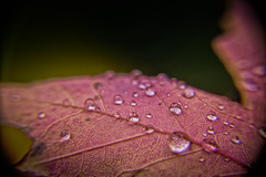 Rainy day (@magda627) Tags: autumn edit lightroom sliderssunday hss bokeh color nature water leaf drop fall flickr garden sun plant macro outdoor evening sony closeup green droplet rain tiny detail automne