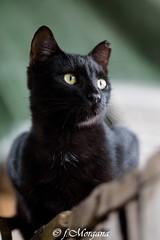 (fatamorgana.cb) Tags: micionero micio gattino wildcat cat