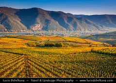 Austria - Wachau Valley - UNESCO Area - Vineyards during autumn time (© Lucie Debelkova / www.luciedebelkova.com) Tags: wachau wachauvalley unesco austria austrian österreich republicofaustria republikösterreich centraleurope europe eu austrianempire world exploration trip vacation holiday place destination location journey tour touring tourism tourist travel traveling visit visiting sight sightseeing wonderful fantastic awesome stunning beautiful breathtaking incredible lovely nice best perfect water waterscape wasser agua reflection wwwluciedebelkovacom luciedebelkova luciedebelkovaphotography
