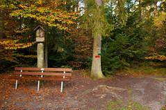 Eustachius in Bergham (sebastianwerba) Tags: waldspaziergang waldspazierganginderfrüh wandern spazierengehen sport ausgleich erholung wald wälder baum bäume bergham anleng niederbayern bayern landkreispassau werba sebastianwerba 27102019 natur herbst goldenerherbst morgenluft morgenspaziergang schwammerlsuchen pilz pilze pilzesuchen
