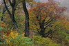 Autumn Color (seiji2012) Tags: japan niigata tree autumn okutadami 新潟 紅葉 奥只見