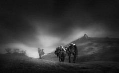into the mist ... (tchakladerphotography) Tags: blackwhite bw person pov travel trees atmosphere atmospheric animal himalaya highland hills horse misty man monochrome sky foggy fineart grass