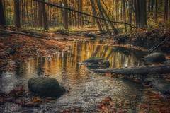Forest In Fall (Ken Mattison) Tags: autumn fall outdoor nature color colours fallcolors yellow water reflections woods forest trees landscape composition moody atmosphere serene tranquil parks milwaukeecountyparks wisconsin usa lightandshadows