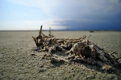 Salt Lake (JarHTC) Tags: fujifilm xt20 samyang 12mm salt cyprus lake larnaca