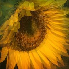sun salutations (B. jeweled) Tags: hss sliderssunday multiexposure