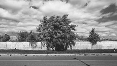 we.are.in.the.middle.of.a.transition.where.we.cannot.stand.still (jonathancastellino) Tags: toronto sky cloud clouds wind fence tree leica q road sidewalk drama