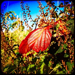 Nature's Colour Palette (Julie (thanks for 9 million views)) Tags: fall season autumn postprocessing leaves colourful iphone6s squareformat hipstamaticapp foliage sliderssunday hss 100xthe2019edition 100x2019 image90100