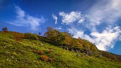 Escaping the Ungulates (prajpix) Tags: trees wood group sky clouds hill cliff face rock rocky vegetation cropped mountain invernesshire highlands scotland autumn colours pocket hillside land landscape