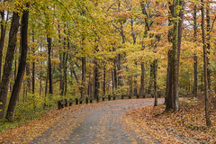 Fall Road (Bernie Kasper (6 million views)) Tags: art berniekasper color cliftyfallsstatepark cliftyfalls colour d750 digital evening family fall fun hiking historic indiana jeffersoncounty light landscape leaf love madisonindiana madisonindianacliftyfallsstatepark nature nikon naturephotography new national nikkor outdoors outdoor old outside orange photography park photos photo image raw red road statepark travel trail tree trees unitedstates usa