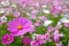 DSCF2280 (Keishi Etoh rough-and-ready photoglaph) Tags: kirinbeerfukuokafactry fukuoka 福岡 甘木 amagi flower fujifilm xh1 fujifilmxh1 apsc fujinonxf1024mmf4rois fujinon fuji キリンビール福岡工場