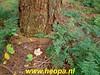 "2019-10-25 Raalte     4e dag Heeten    33 Km (89) • <a style=""font-size:0.8em;"" href=""http://www.flickr.com/photos/118469228@N03/48968093663/"" target=""_blank"">View on Flickr</a>"