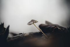 Desolate (micke.vmix) Tags: carlzeiss zeiss aposonnart2135 sonnar135f2zf d850 mushroom