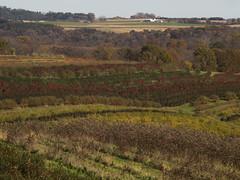 Across the fields (citrusjig) Tags: olympus omdem10 spiratone135mmf28 fields crops rows farmland svf