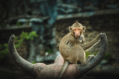 (Sara De Sanctis) Tags: blue monkey thailand temple animal portrait nature eyes eye animals documentary reportage asia