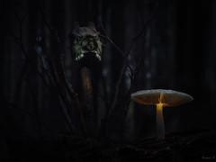 Tales from the undergrowth (Eifeltopia) Tags: spooky mushroom skull eifel forest creepy bewitch fascinate spellbind curse totenkopf altar enchanted deer dark darkness shadowy düster frightening schädel scared märchen imaginatively fanciful tale story woods pilz mysterious