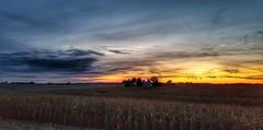 we will reap what we sow...(HSS) (BillsExplorations) Tags: sunset harvest fall autumn field corn hss sliderssunday evening farm agriculture illinois