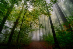 In the forest (ceca67) Tags: nature fog forest landscape outdoors photography switzerland path walk svetlanperic trees nikonphotography ceca67 svetlanapericphotography