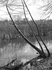 """L'arbre au bord de l'eau... <a style=""""margin-left:10px; font-size:0.8em;"""" href=""""http://www.flickr.com/photos/99995712@N00/48968594798/"""" target=""""_blank"""">@flickr</a>"""