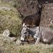 Donkeys (Ethiopia Rte. A2)