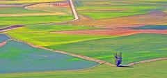 campos de Castilla, color y geometría. (Luis Mª) Tags: palencia spain paisaje castilla geometría campos color