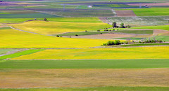 campos de Castilla. Geometría y color. (Luis Mª) Tags: spain castilla palencia paisaje color geometría campos