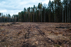 Deforestation of coniferous forests. (ivan_volchek) Tags: agriculture autumn autumnenvironment broken burn campaign centraleurope change cleared climate coniferousforests conservation cut damage deciduousforest deforestation deforested destruction development disaster earth ecology environment environmental forest global green landscape leaves logging nature outdoor palm protection rain river road russia south timber tree trees tropical wood woods