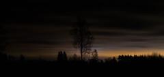 Night tree (JaaniicB) Tags: canon eos 77d sigma 1750 mm f28 night tree clouds mood tripod exposure raw